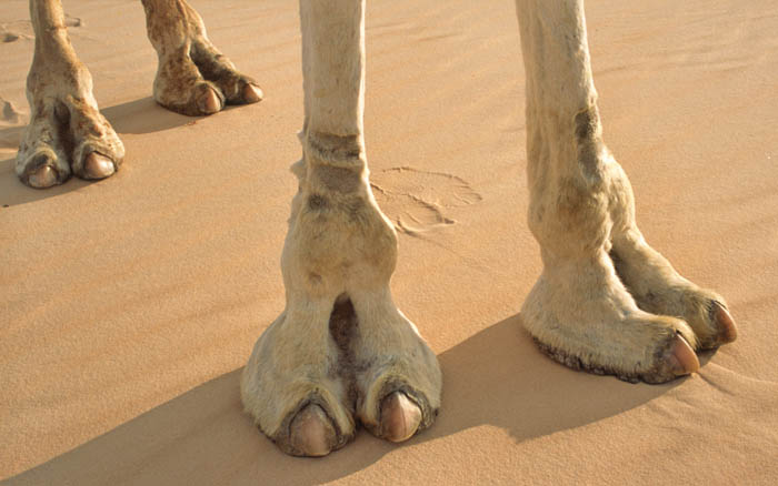 Camel Toe Tuesday requested by Fireball